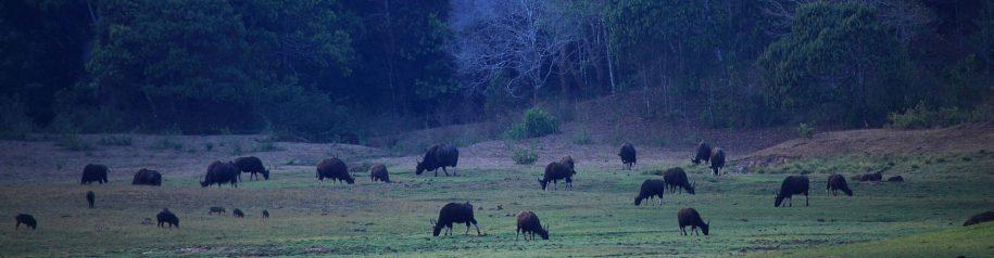 Thekkady Wildlife